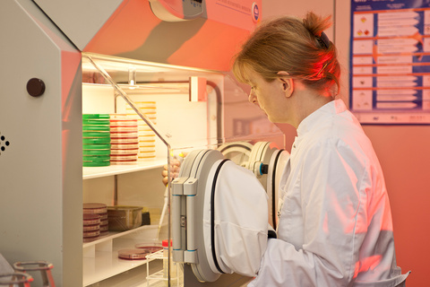 Work in the anaerobic work bench with pipette